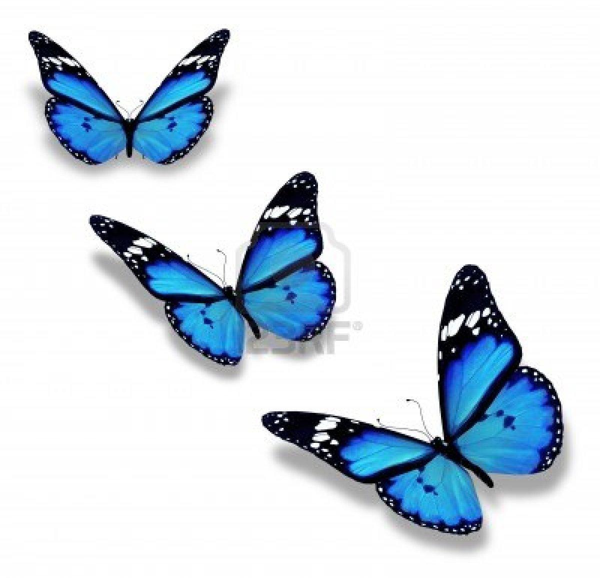 Imagenes Con Mariposas - Imágenes tiernas de mariposa Imagenes Romanticas para
