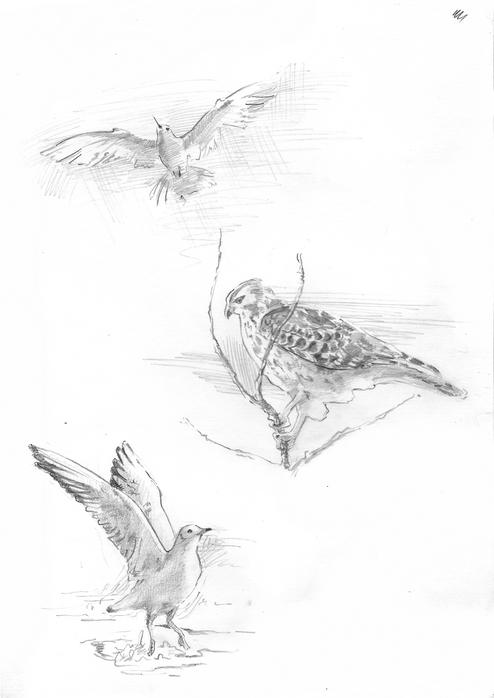 наброски птиц
