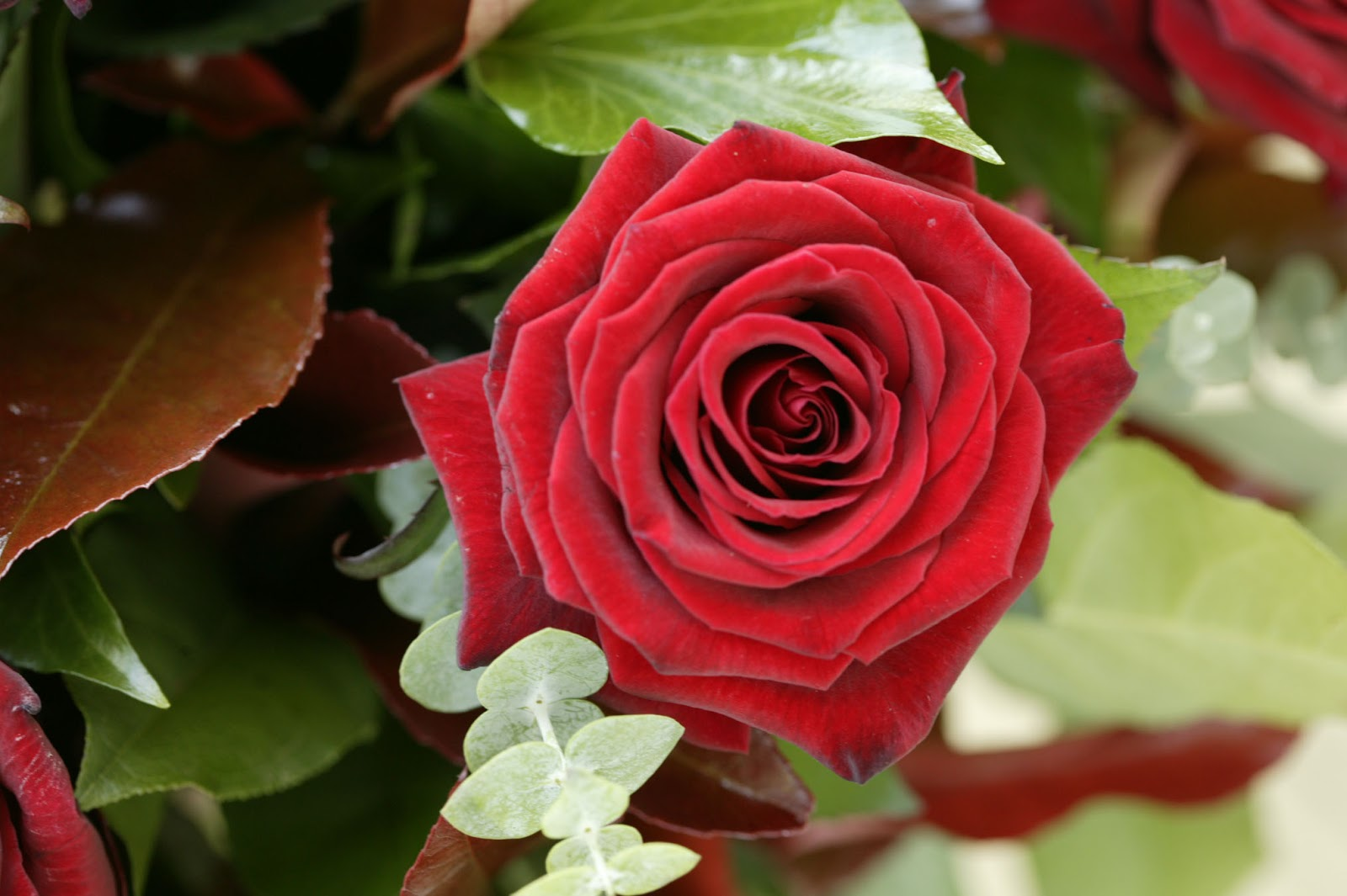 Flower homes flowers of world countries s for Images of bouquets of roses