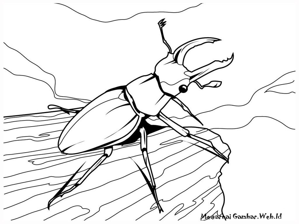 Download dan warnai gambar - gambar serangga dibawah ini yang telah ...