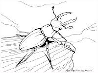 Mewarnai Gambar Kumbang