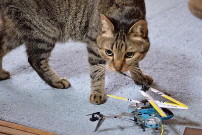猫、ネコ、ねこ、ストーブ、ヘリコプター
