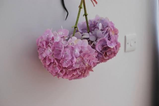 2 pink Hydrangea flowers hanging upside down inside house on wall