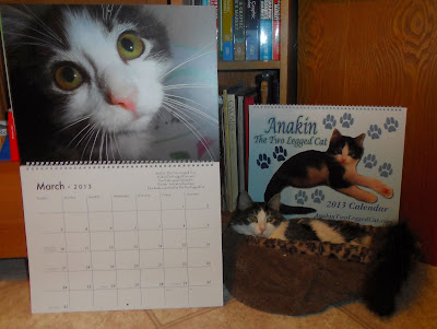 Anakin The Two Legged Cat 2013 Calendar
