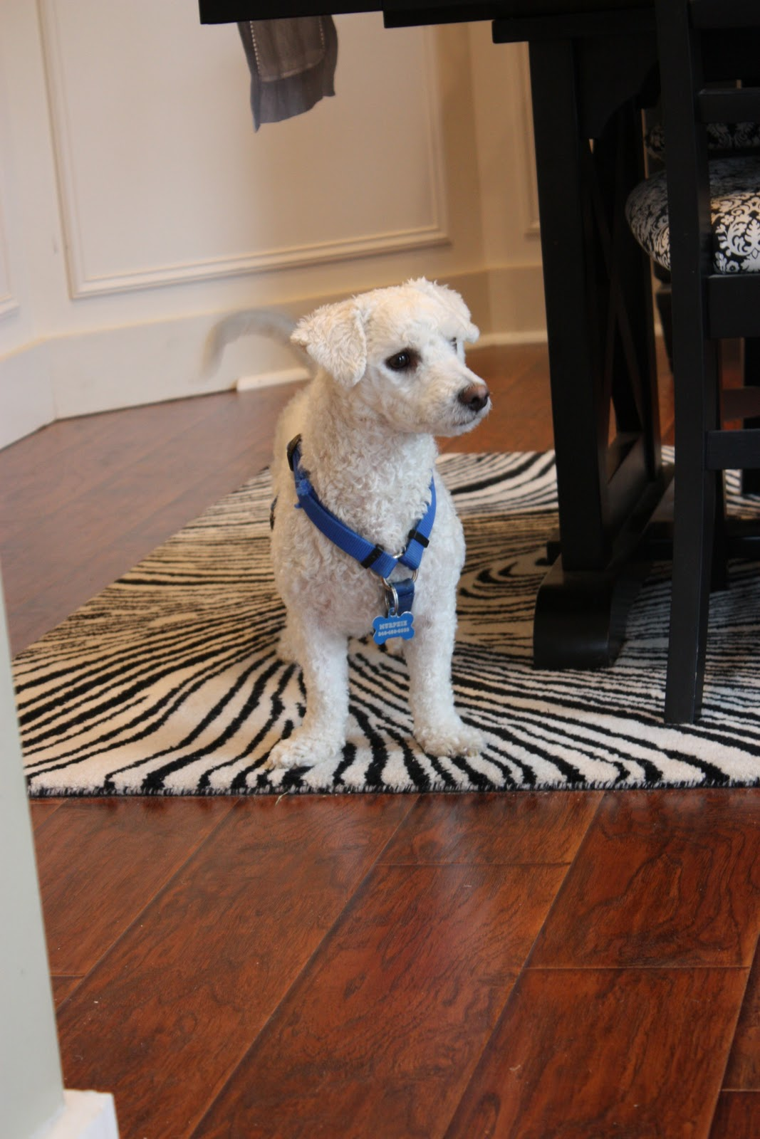 The Yellow Cape Cod  Days Of Building Character More On The Floor - Dog booties for hardwood floors