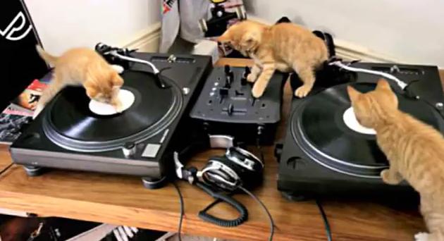 Insolite trois chatons dj remixent sur une table de mixage vid o blogparfait Comment choisir une table de mixage