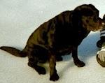 Vår hund Rocky