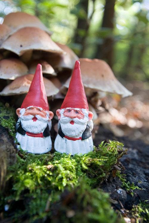 Jardinitis garden gnomes enanitos de jard n for Jardin con enanitos