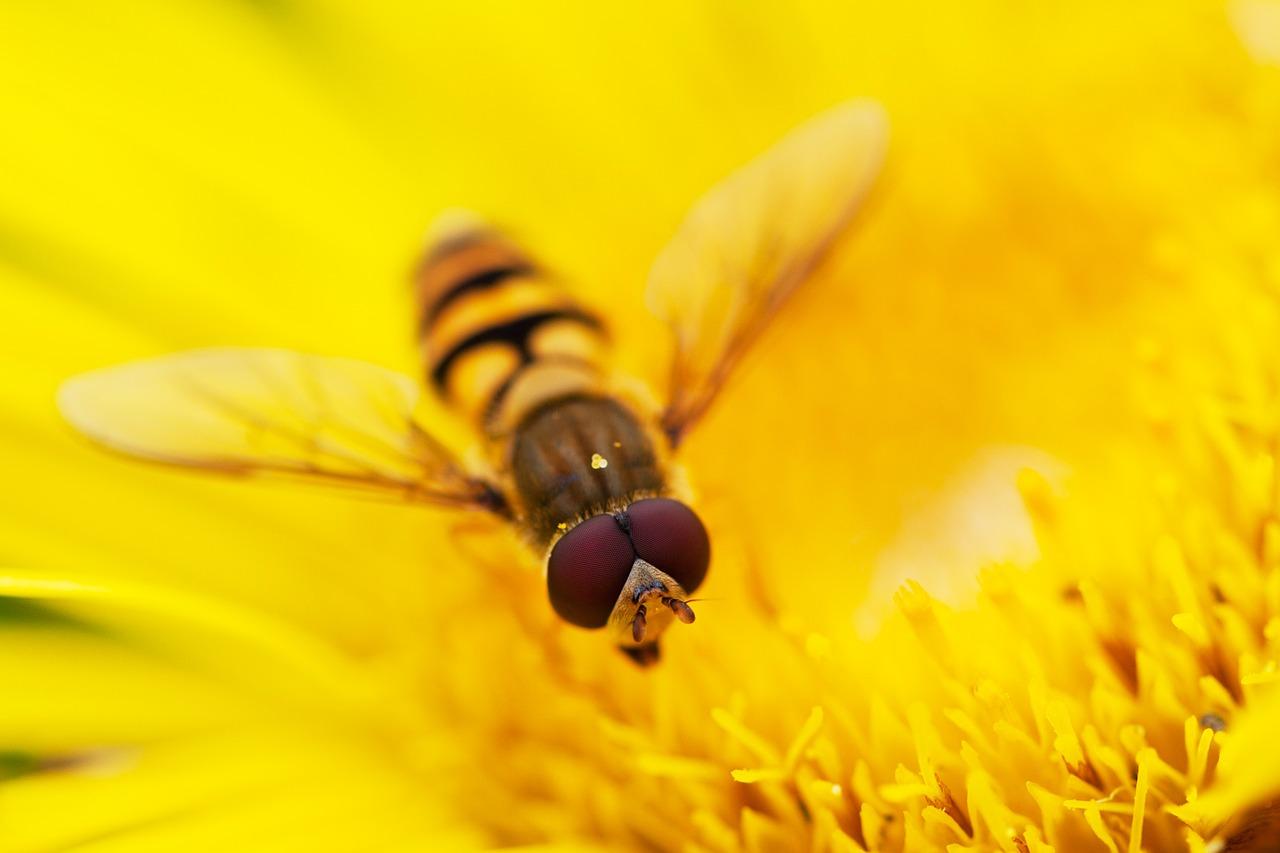 foto de abeja para imprimir