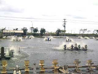 Pengelolaan Kualitas Air Tambak Udang | www.agrotaninusantara.com