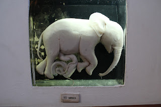 Elephant Fetus at 10 Months