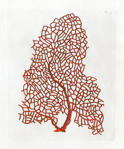SHOW YOUR FRAME: ANTIQUE CORAL DRAWINGS