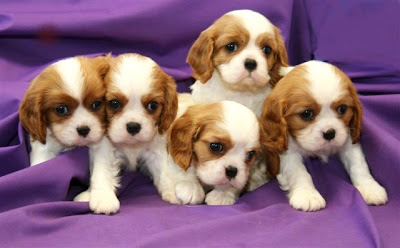Puppies pictures