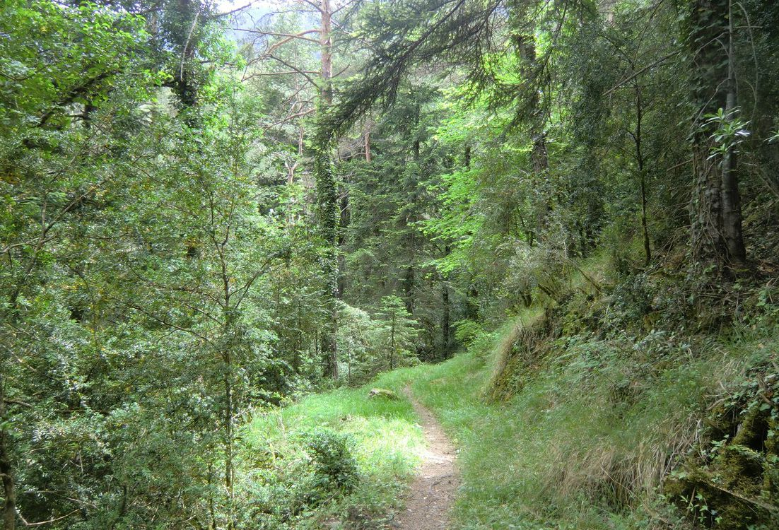 The-path-ascends-in-the-forest-of-the-Lauzette