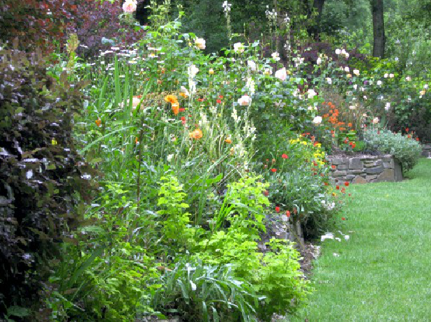 Roses, lilies and the promise of 8 foot orange blooms! | Visit ...
