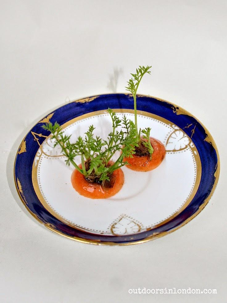 Growing Carrot Tops