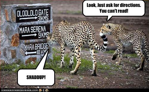 Cheetah quotes - photo#18