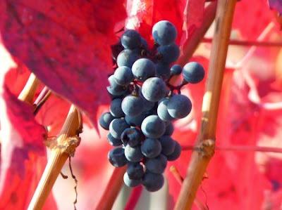 Τα φαρμακευτικά κρασιά των Ελλήνων