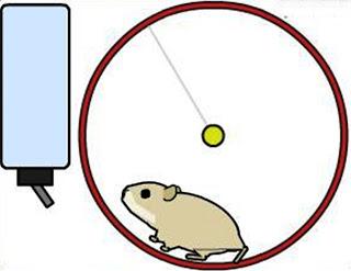 Cara Memasang Hewan Piaraan Blog, hewan blog, binatang untuk blog, blog animal, aniasi hewan blog