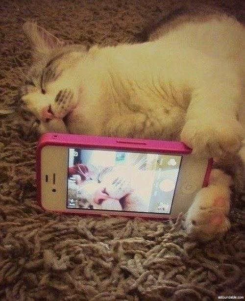 Les chats aussi subissent la mode du selfie !