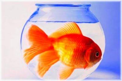 volantinaggio : no all'acquario