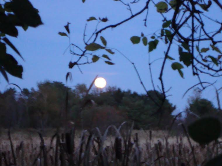 ...' moon rise over the marsh '...