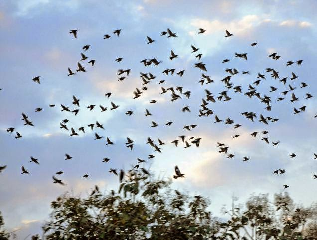 Birds are migrating in the winter
