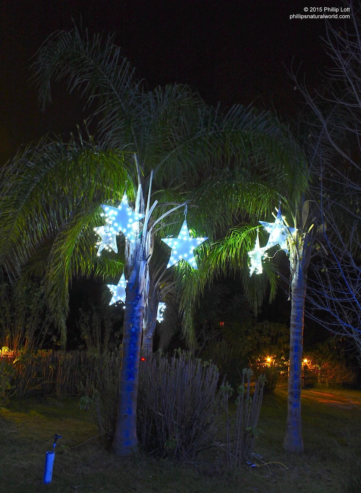 florida christmas palm trees - Florida Christmas