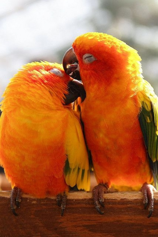 Two birds making love, bird love, cute bird picture, bird picture