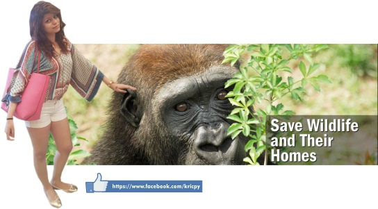 Khera - Save Monkey