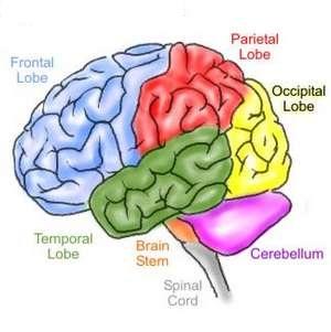 Meningkatkan Kinerja Otak