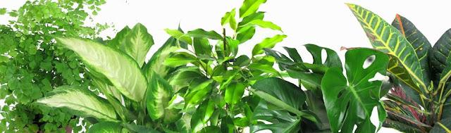 Цветя и растения, пречистващи въздуха