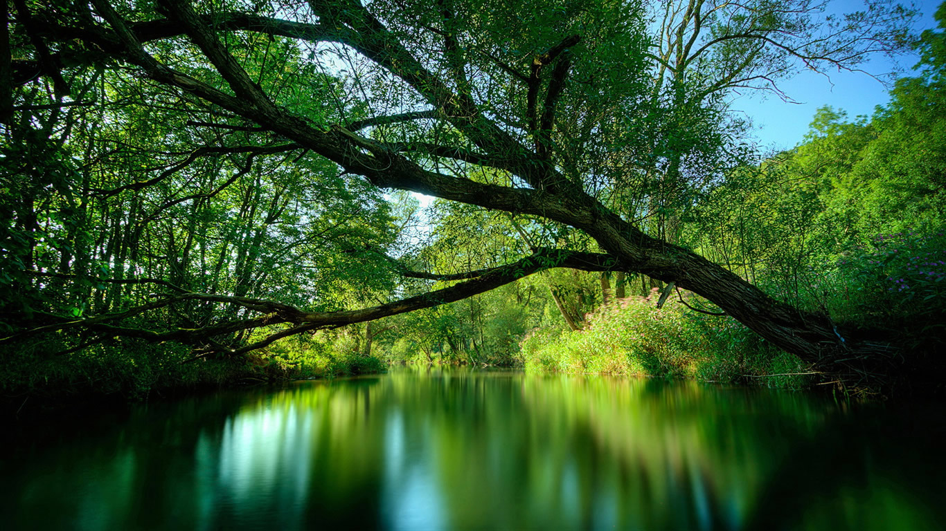 Wallpaper & Pictures: Beautiful Rainforest Backgrounds