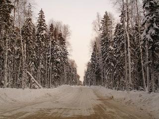 Зимник среди леса