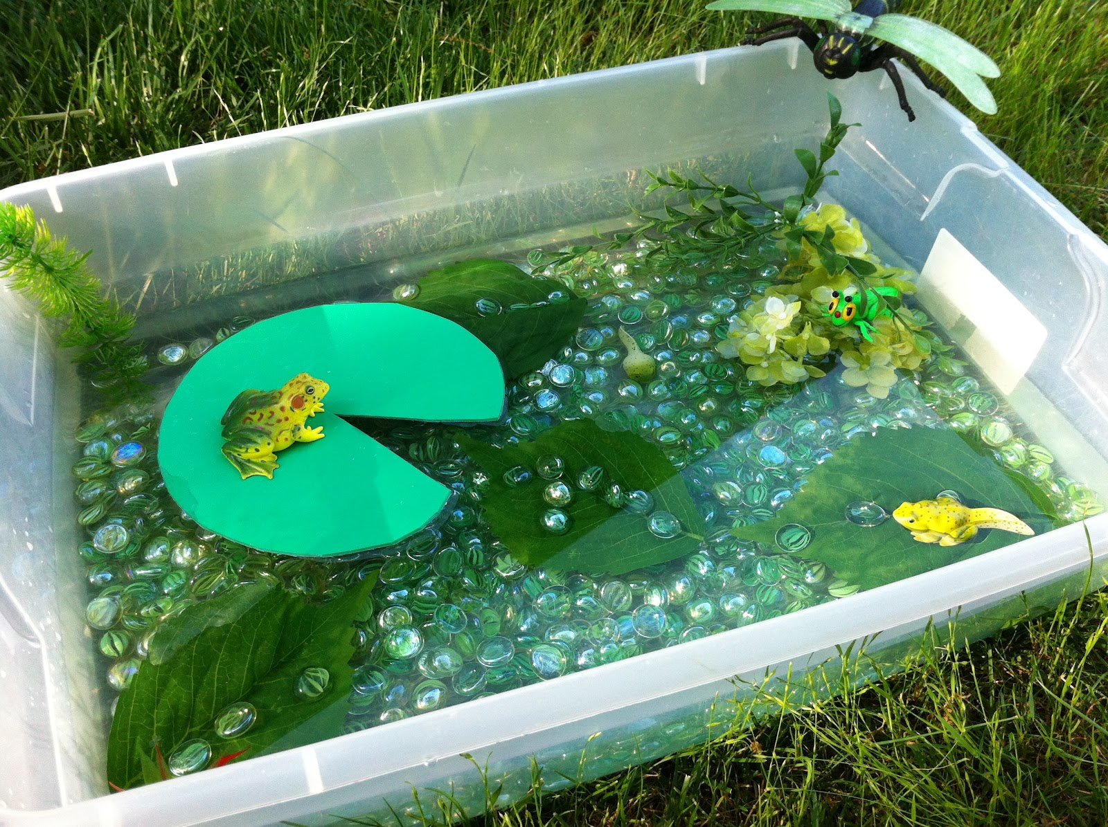 Play create explore pond lifecycle of a frog sensory bin for Garden pond design books