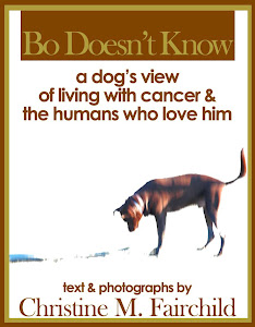 Bo's First Book! All Profits Go to Charity!