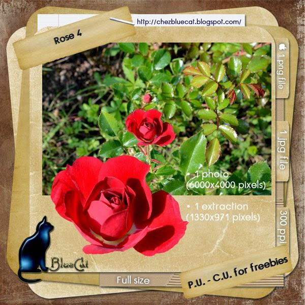 http://1.bp.blogspot.com/--atR1KRzq-U/U-dGvy93v_I/AAAAAAAAFbI/PG2xqCRE7QE/s1600/BlueCat_CURose4.jpg