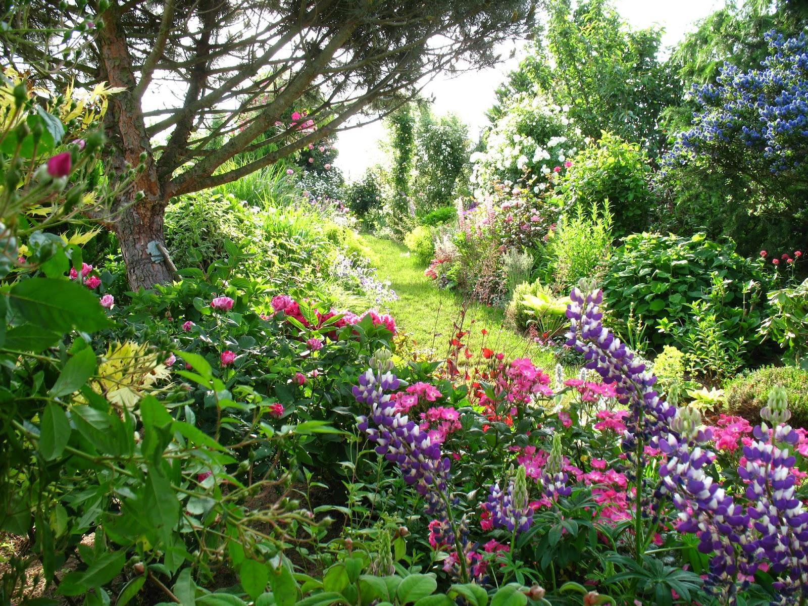 Roses du jardin ch neland ambiance fleurie - Jardin de chen ...