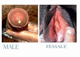 Obat Tradisional Kencing Nanah Pada Pria