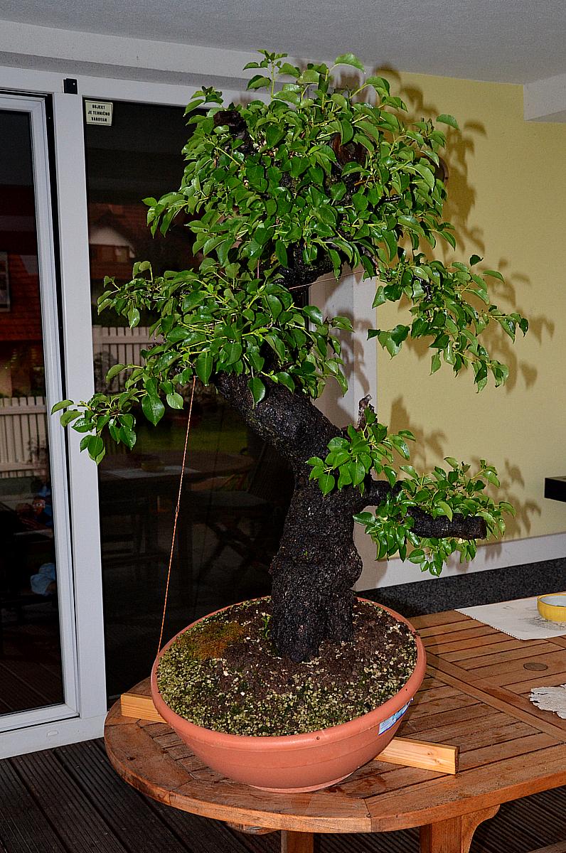 Bonsai Living Art July 2012
