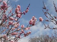 穏やかな春とならず、寒い日になった