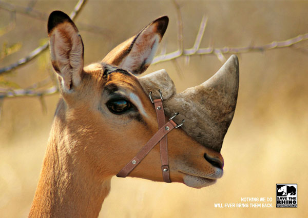 Nothing+We+will+Ever+Bring+Them+Back+Save+The+Rhino Creating Creative Wild Life Awareness: Animals In Advertisements
