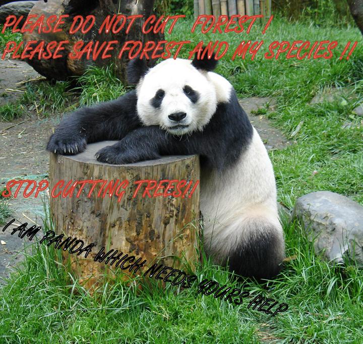 save forest save panda save forest save panda