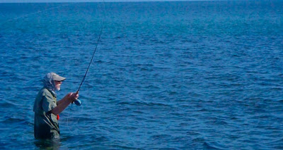 Sea of Cortez, fly fishing, roosterfish, African pompano