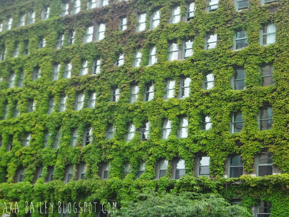 Building covered in ivy, Vancouver, West End