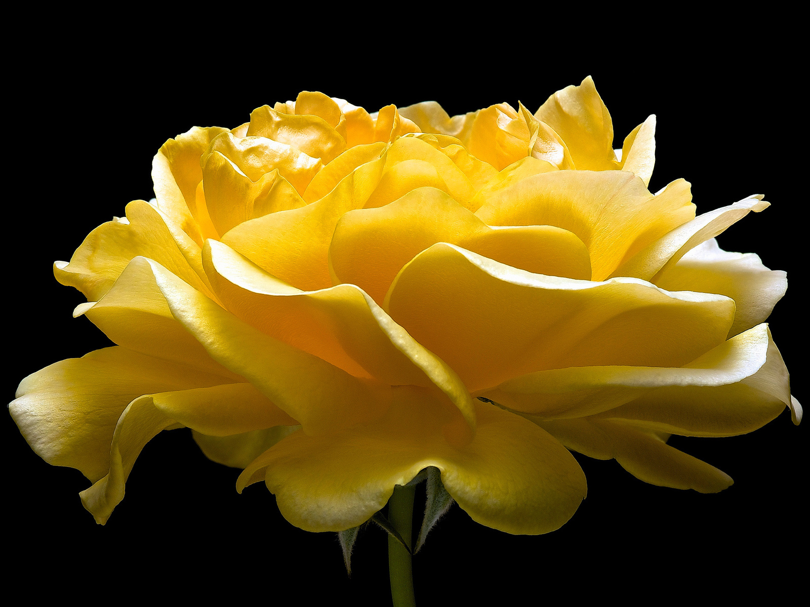 Imagenes De Rosas Bellas Imagenes De Rosas Para Regalar ...
