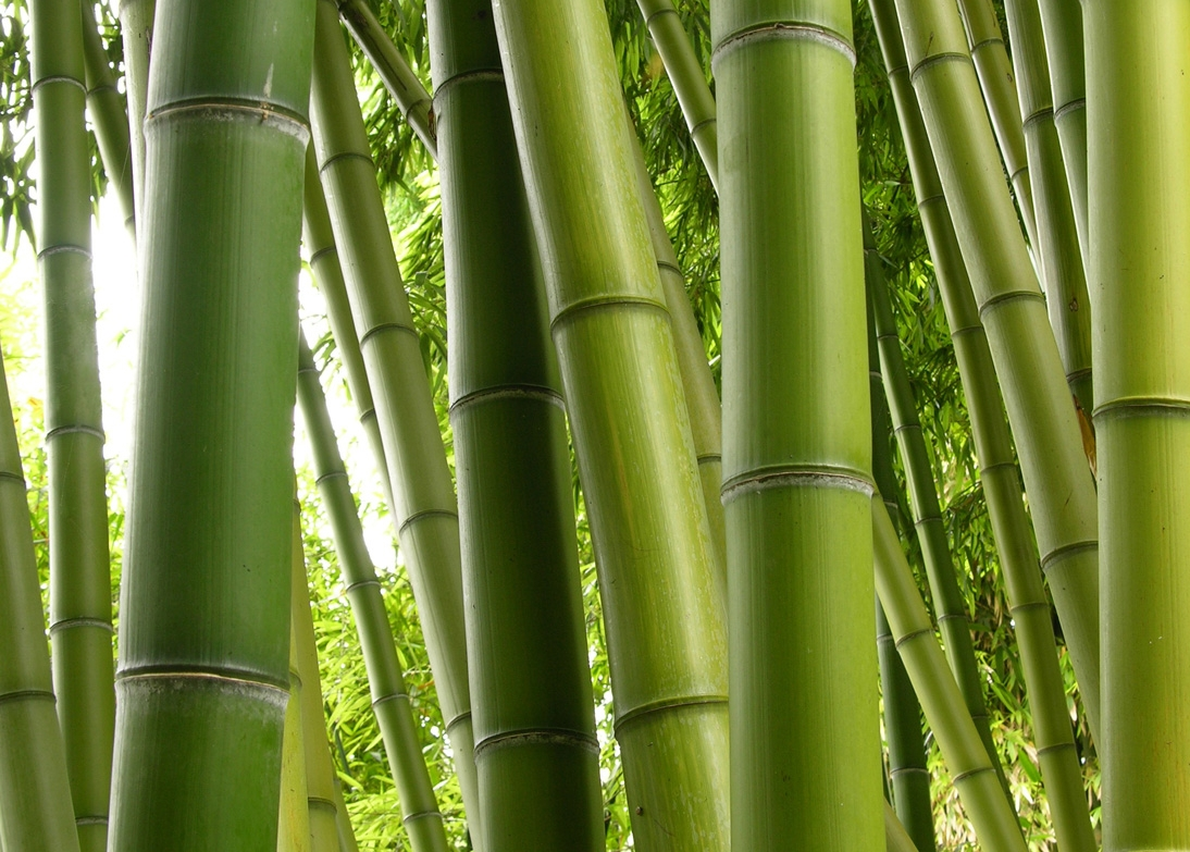 All for funiture bamboo facts for Making bamboo things