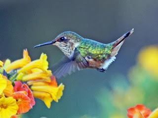 خوارزمية جديدة لجميع نتائج البحث WKI Hummingbird السيو