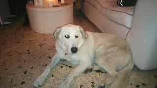 Βρέθηκε στη περιοχή της Μεταμόρφωσης,  κοντά στον προαστιακο, θηλυκό σκυλάκι με κόκκινο λουρί.