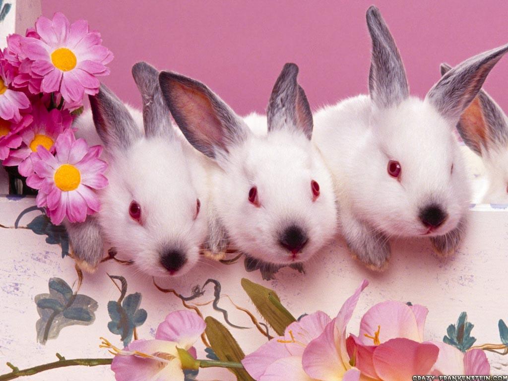 http://1.bp.blogspot.com/--cE7W_fO8ts/TxL8We3hIvI/AAAAAAAAC0M/XDcYE-eOCr4/s1600/Sweet%20Cute%20Wallpapers.jpg